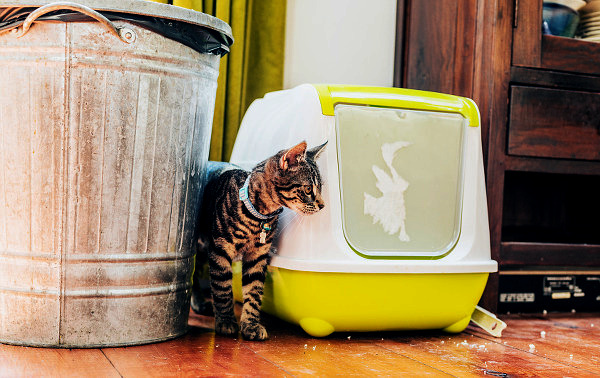 Avoid giving your cats covered litter boxes.
