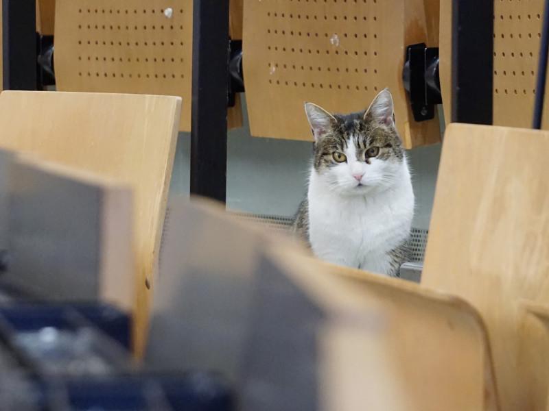 Fräulein Sinner Hildesheim Campus Cat - Photo Credit: Isa Lange