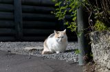 New Zealand's War on Cats Escalates to Name-Calling