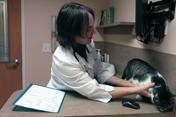 A veterinarian examines a cat.