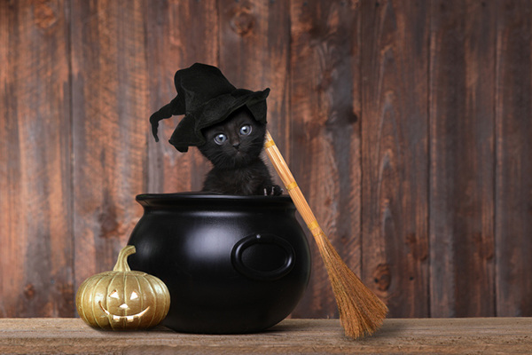 A black cat with a Halloween pumpkin, cauldron, broom and witch hat.