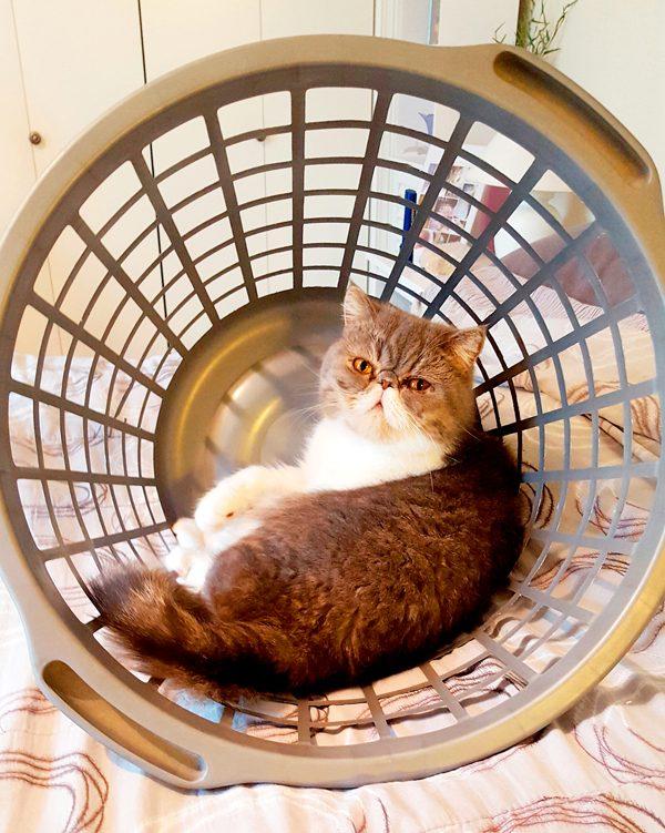 14-Pix-Fav-Spot-Kaydin-laundry-basket