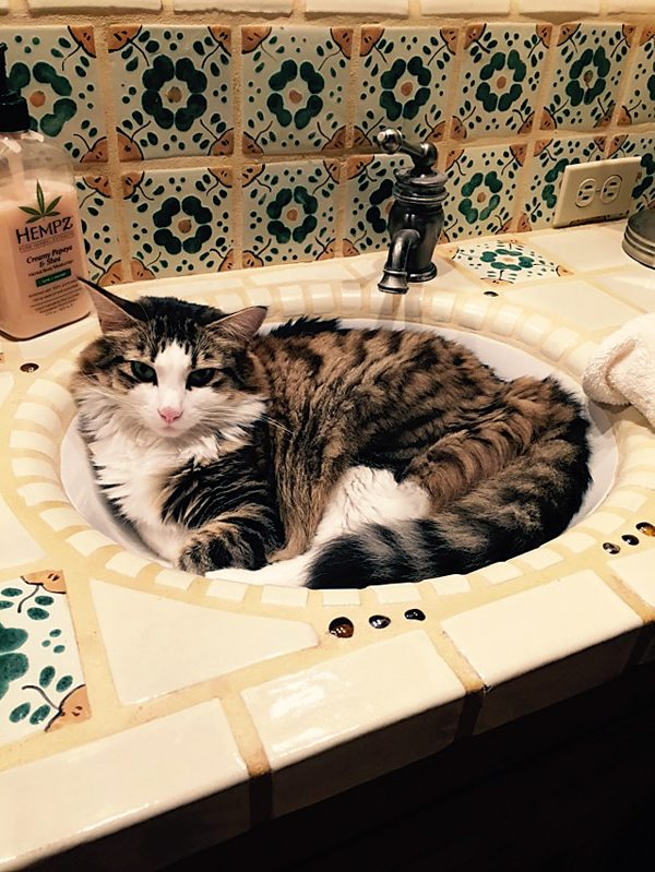 4-Pix-Fav-Spot-Simon-sink