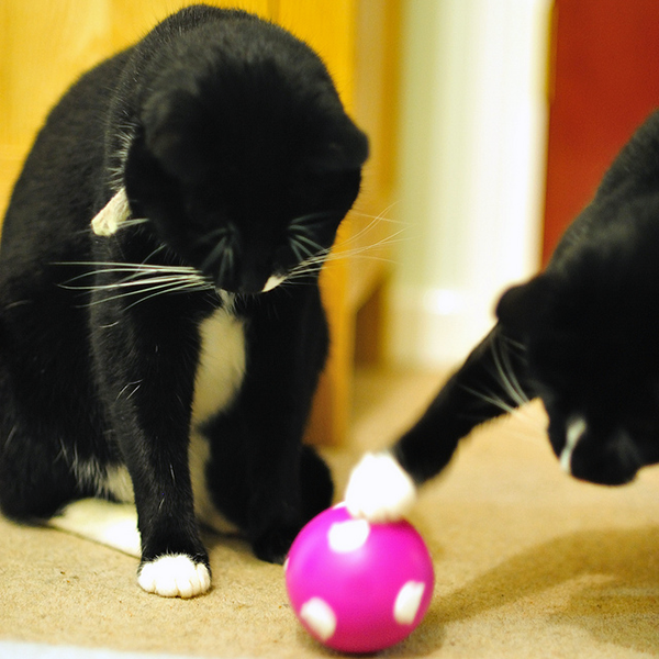 A treat ball can be a great way to provide mental stimulation and exercise. Photo CC-BY John Wright