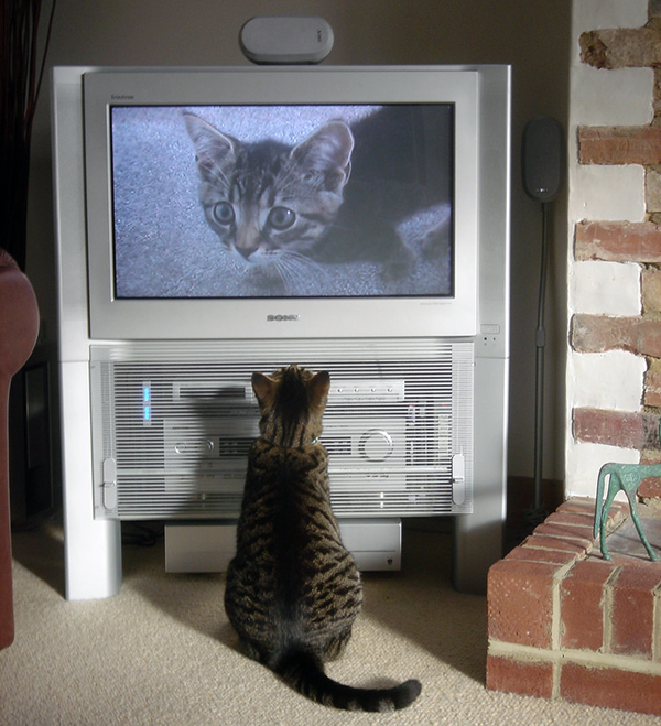 "This wasn't exactly what I meant by ""kitty TV."" Photo CC-BY cloudzilla"