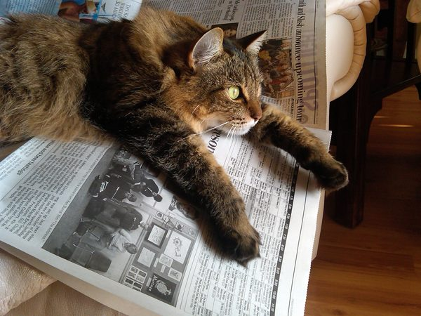 7-Pix-Fav-Spot-Bernie-newspaper