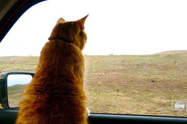 """Prairie dog! Bingo!"""