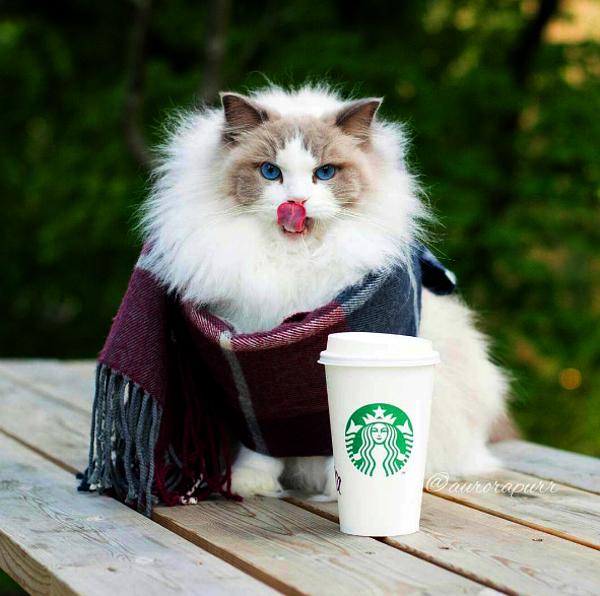 Princess-Aurora-Starbucks