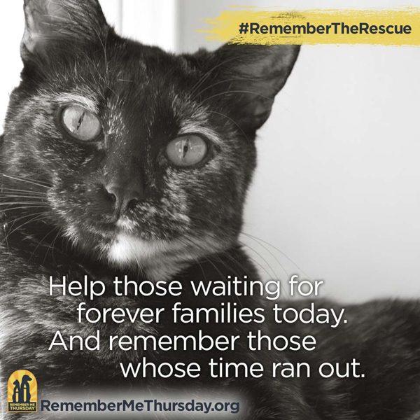 Remember-me-Thursday-promo