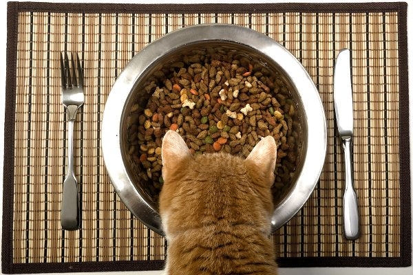 Each cat needs her own feeding station that are placed in separate locations.