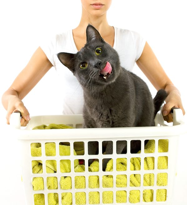 gray-cat-laundry-basket-woman-150095018