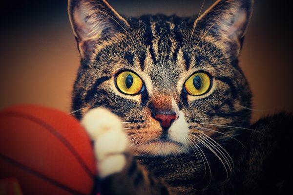 kristen-ledlow-magic-cat-01