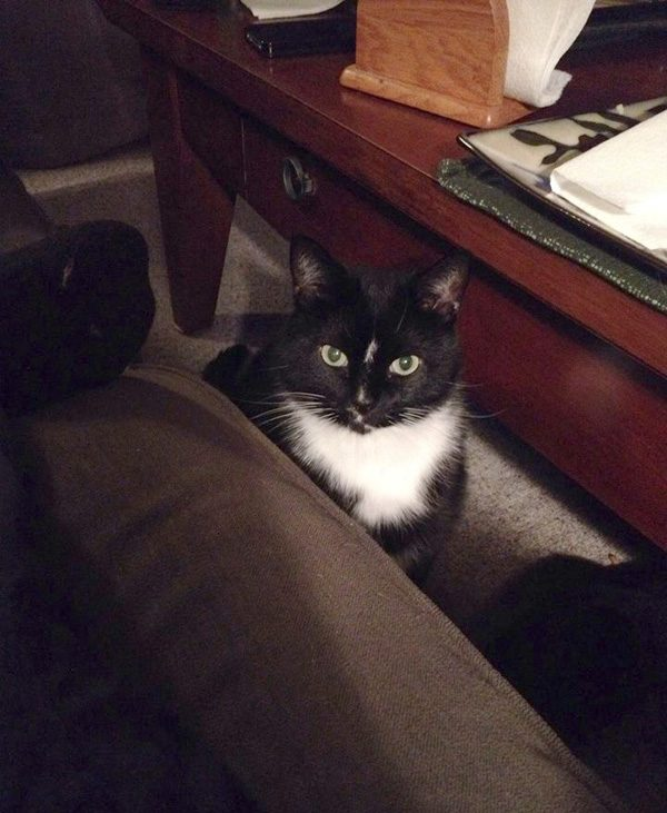 cosmo-cat-staring
