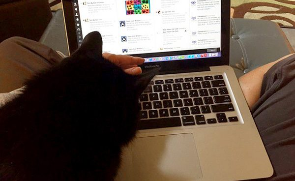 cosmo-cat-helping