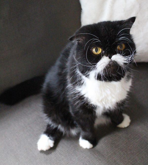 my-cat-kyle-03
