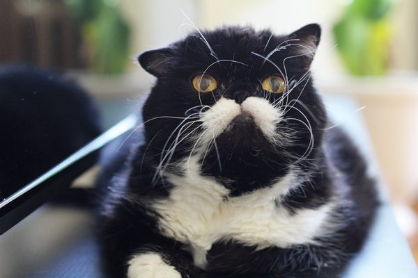 my-cat-kyle-04