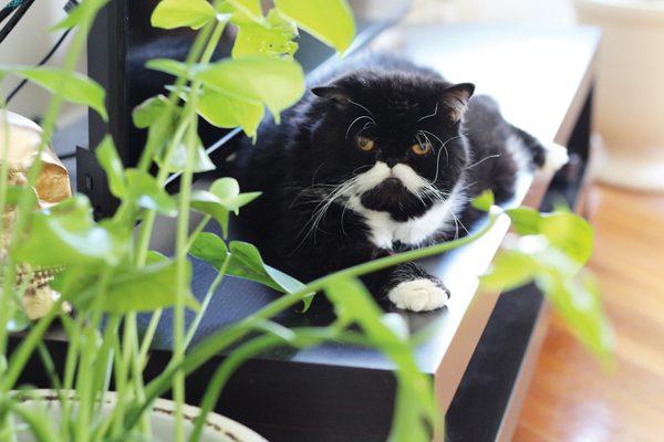 my-cat-kyle-05