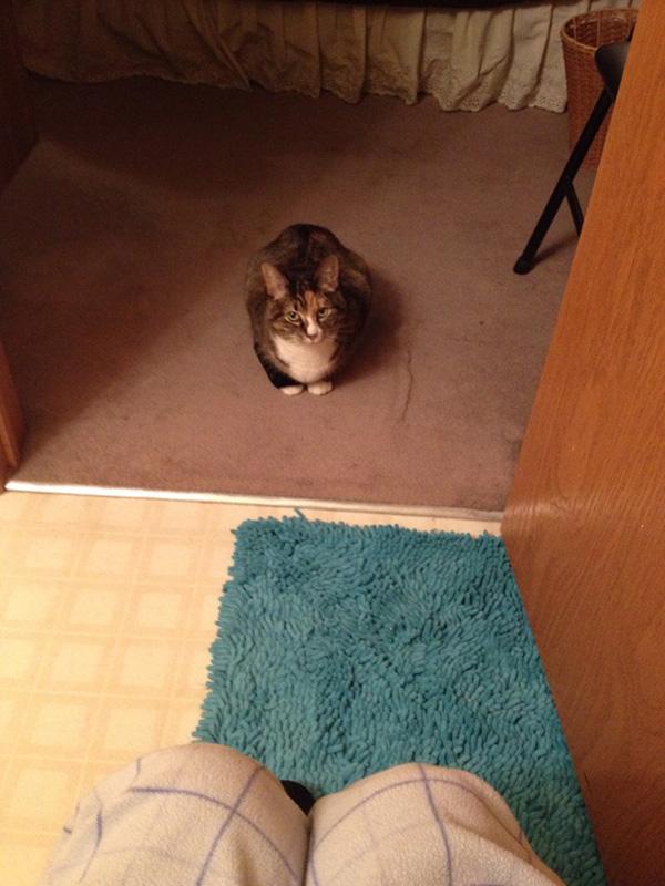phoebe-cat-bathroom