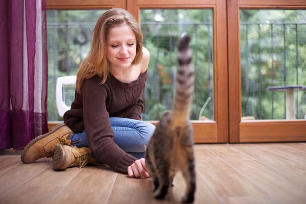 A woman encourages a cat to socialize