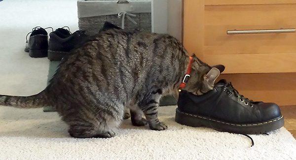 Cat-Dandy-Foot-Fetish-08