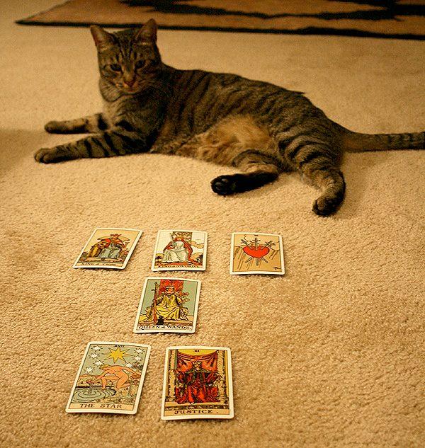 Cat-Tarot-Thomas-6-cards