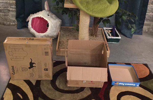 Three boxes await my cats' judgement.