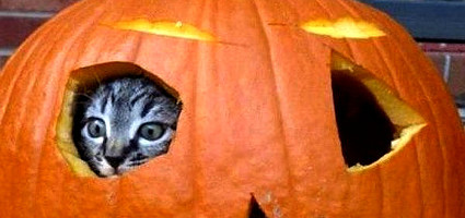 5 Jack O Lanterns That My Cats Would Carve For Halloween Catster