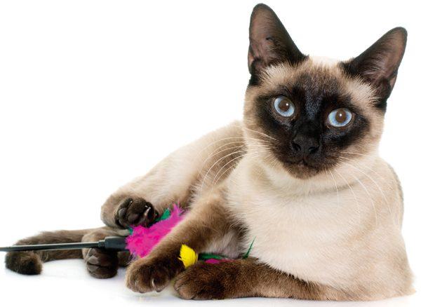 cat-quiz-clever-C