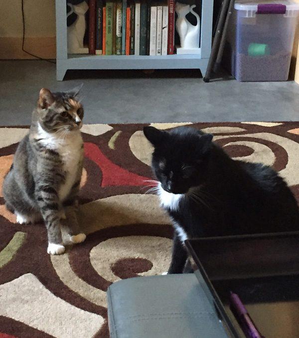 """Tell me again that you didn't steal my catnip rat."""