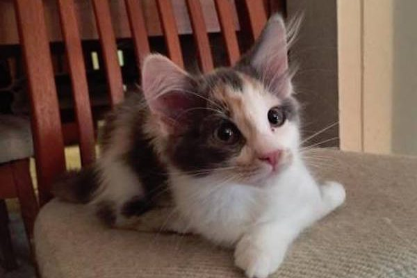 TARA helps adoptable cats find happy homes.