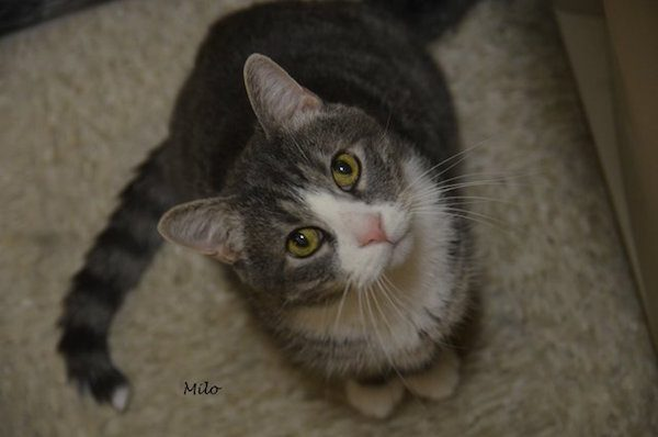 Milo had a grim prognosis, but volunteers at TARA didn't give up on him.