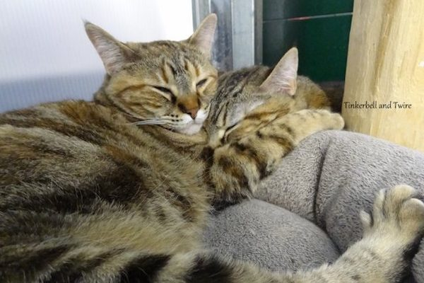 It took two years for Tinkerbell and Twire to feel comfortable around humans. Today they've both been adopted.
