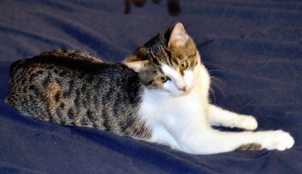 Kitty Elder loves hearing from people who have adopted from her rescue.