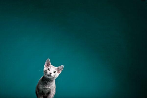 perfect-cat-photos-Kitten