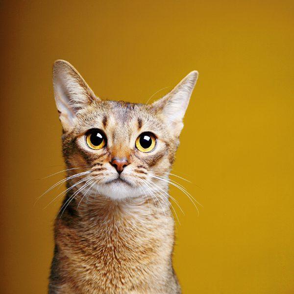 perfect-cat-photos-Penny