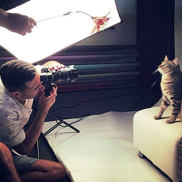 perfect-cat-photos-Scenes-01