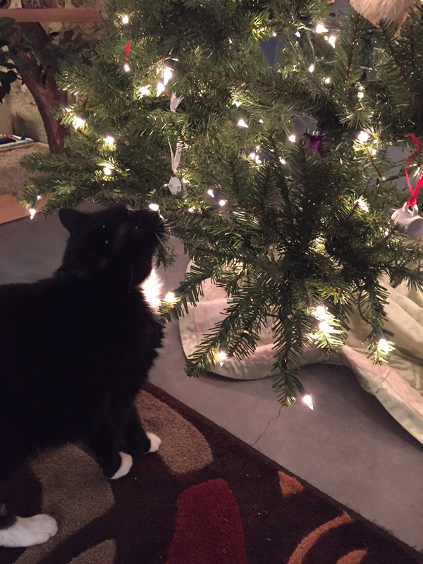 6 Ways My Cats Reacted To My Artificial Christmas Tree
