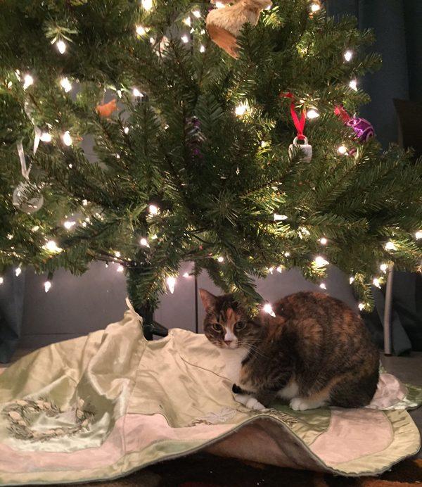 Phoebe loafs the tree.