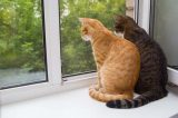 Two cats looking out of a window together.