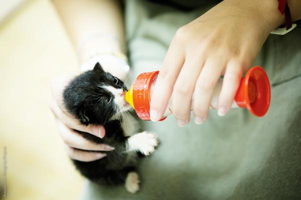 cat-Volunteer-bottle-feed-Japan-2
