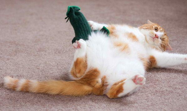 cat-biz-Wink