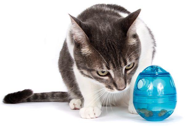 cat-brain-games-food-puzzle-01