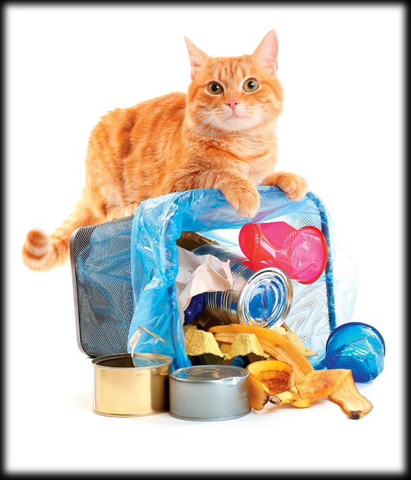 cat-garbage-394407502