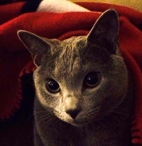 cat-loving-spy-bubbins-close-up