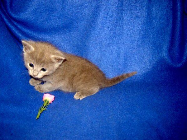 cat-loving-spy-kitten-bubbins