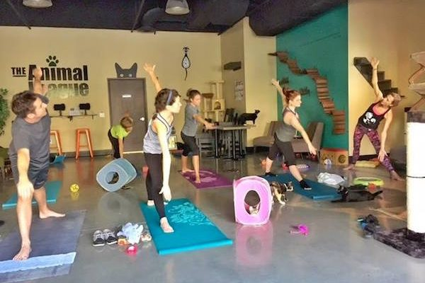 Guests participate in a yoga workshop in the cafe's cat room.