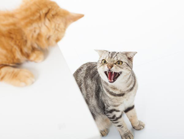 Conflicts are common when cats are poorly introduced to each other.