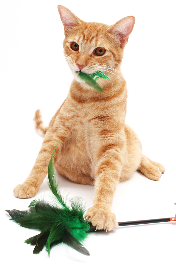 finicky-brain-food-01-cat-feather-toy