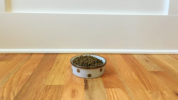 finicky-brain-food-04-bowl