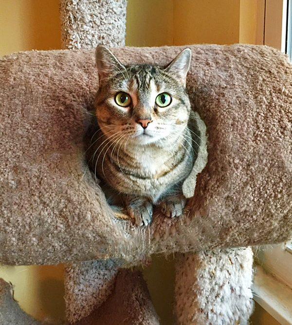 fiona-cat-tree